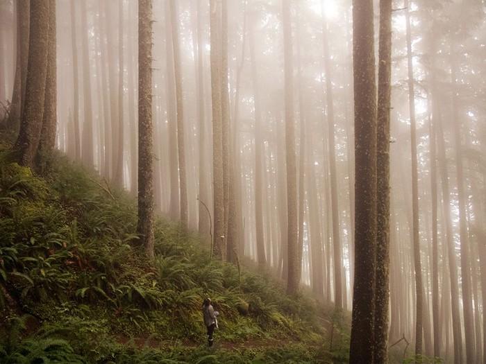 Hiker, Oregon
