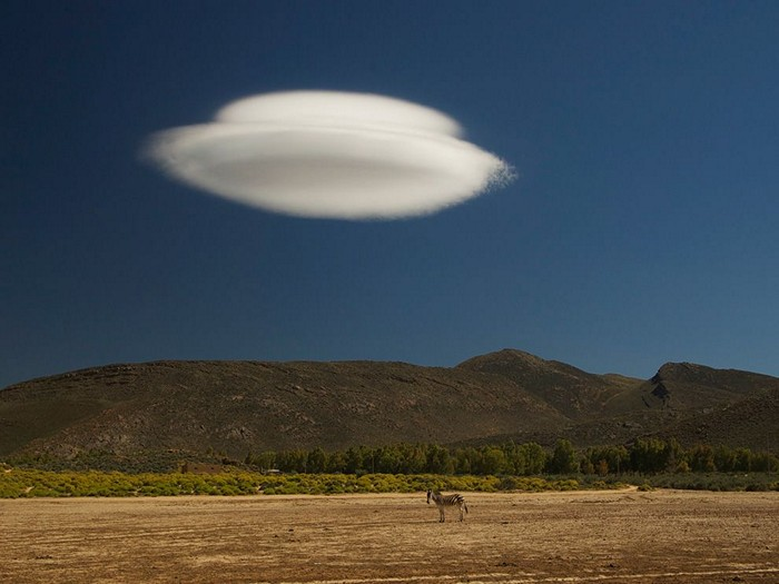 Zebra and Cloud, South Africa