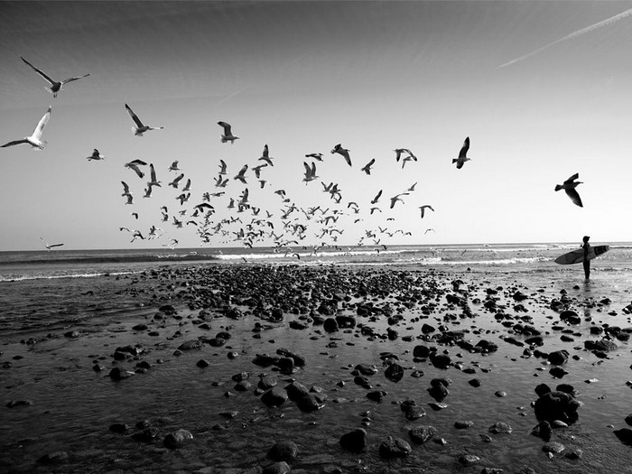 Surfer and Seagulls, Malibu