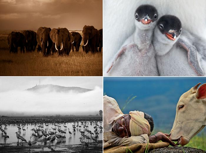 ТОР-фото за 07-13 января от National Geographic