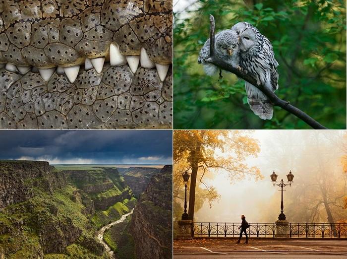 Лучшие фотографии за 10-16 сентября от National Geographic