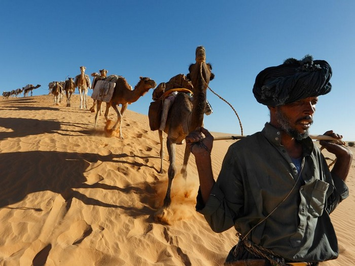 Caravanner and Camels, Mali