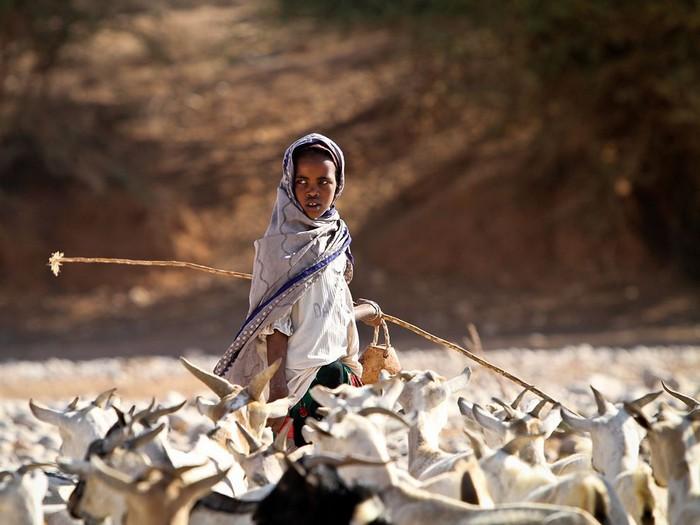Goatherd, Somalia