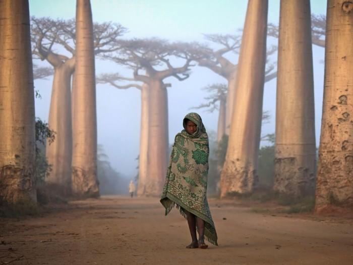 Girl and Baobabs, Madagascar