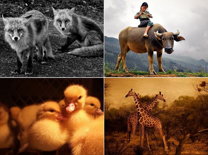 ТОР-фото за 13-19 февраля от National Geographic