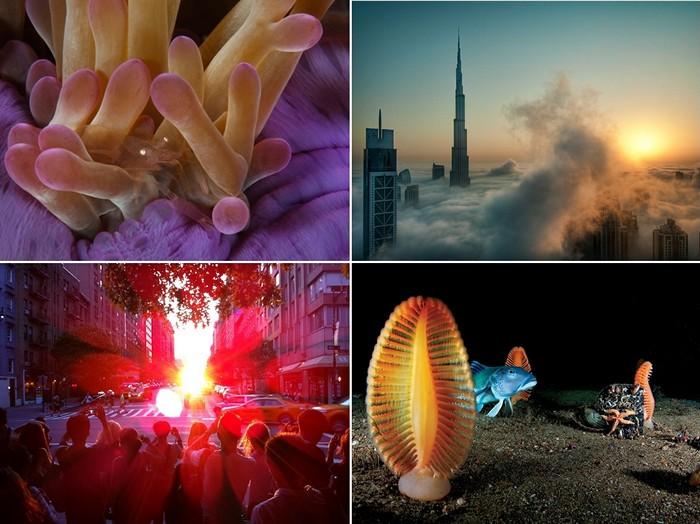 Лучшие фотографии от National Geographic за 14-20 ноября
