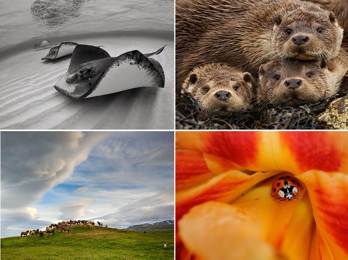 ТОР-фотографии за 14-20 января от National Geographic