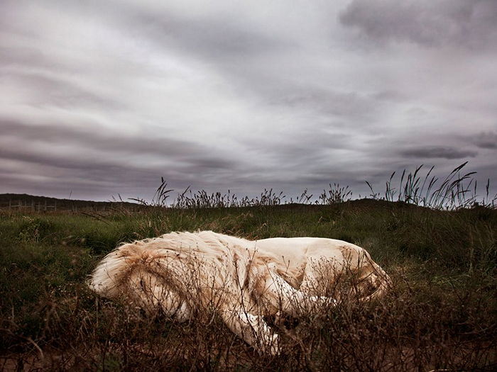 Sleeping Lion, South Africa