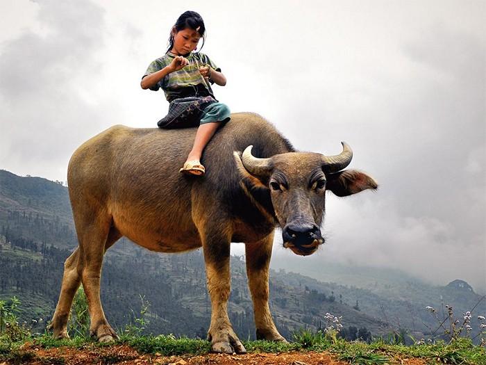 Child and Water Buffalo, Vietnam