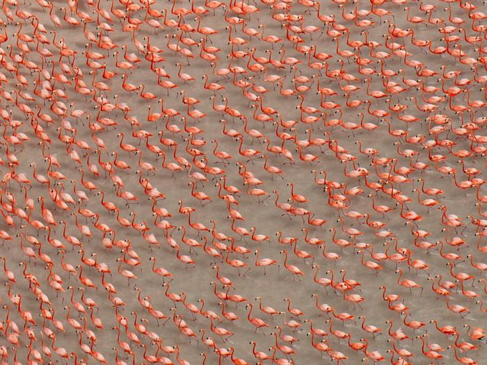 Flamingos, Mexico