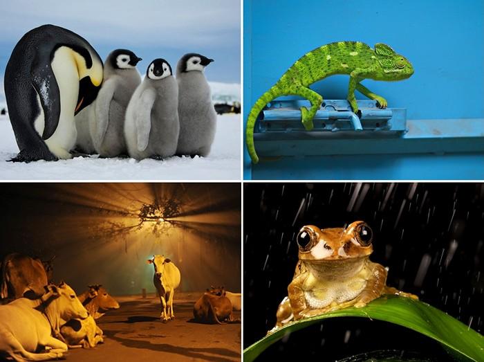 ТОР-фото за 20-26 февраля от National Geographic