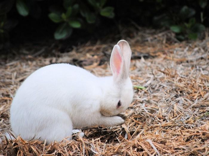 Rabbit, Oregon