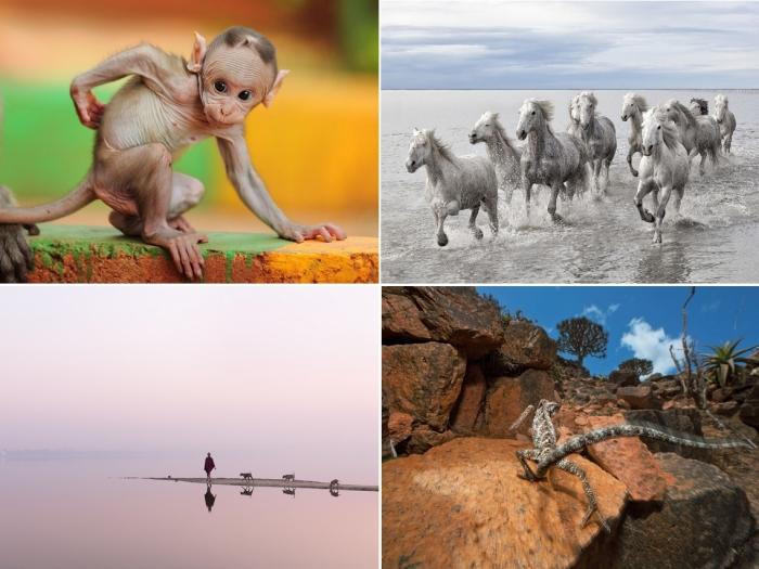 Лучшие фото за 23-29 июля от National Geographic