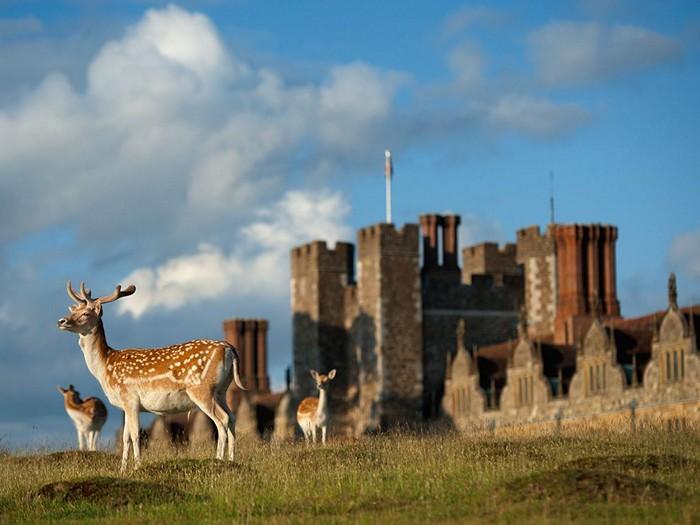 Deer, England