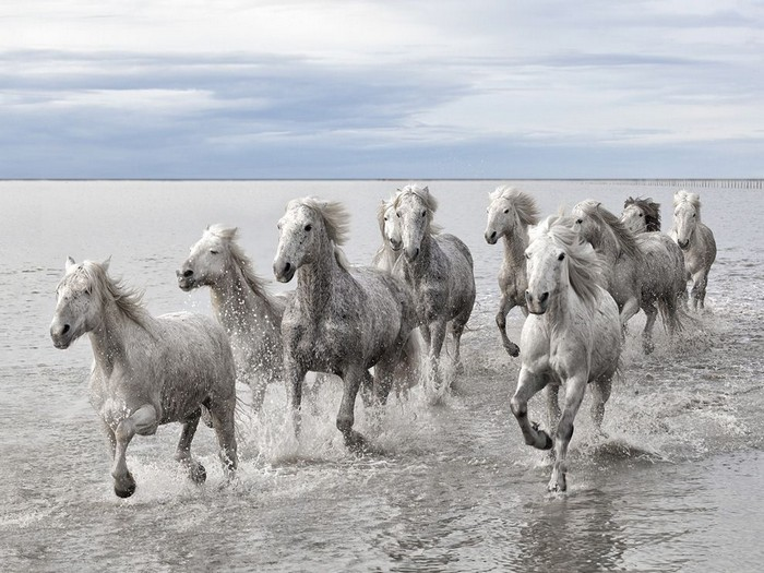 Wild Horses, France