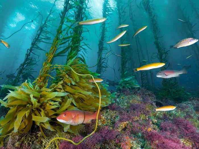 Seamount, Cortes Bank