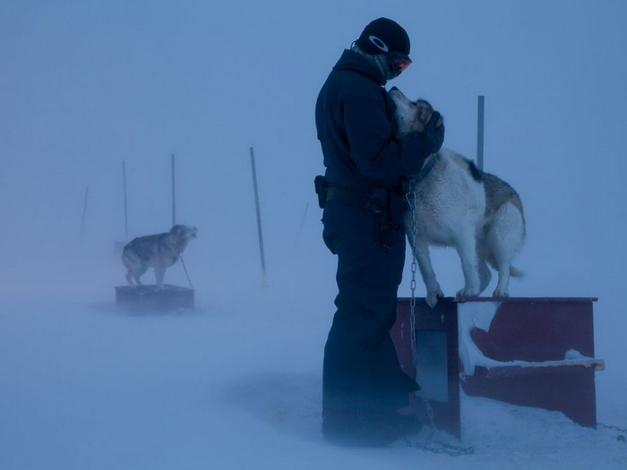 Sled Dogs, Greenland
