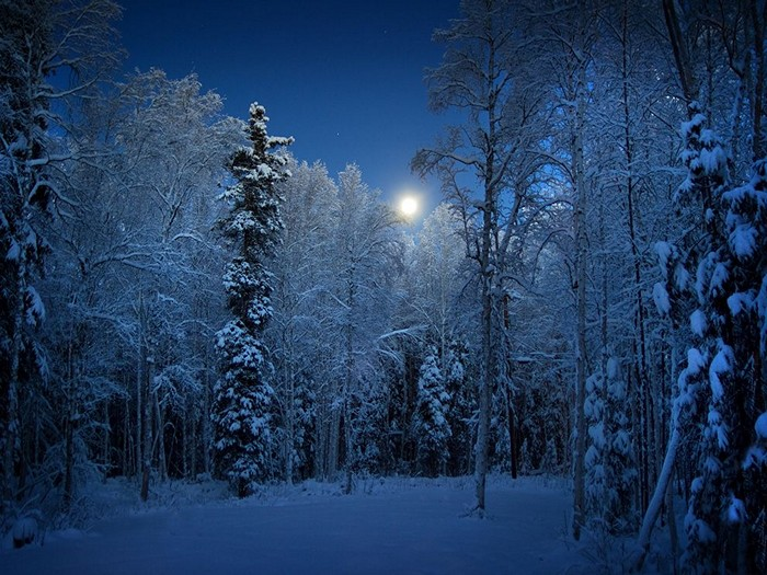 Frosted Trees, Alaska