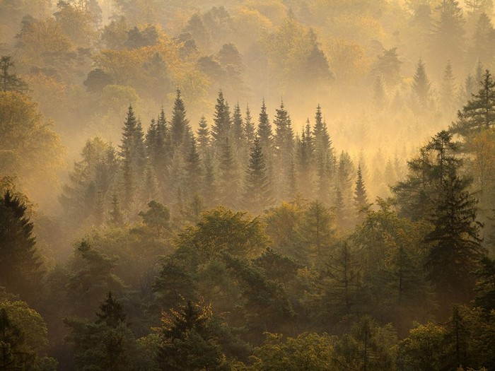 Morning Forest, Germany