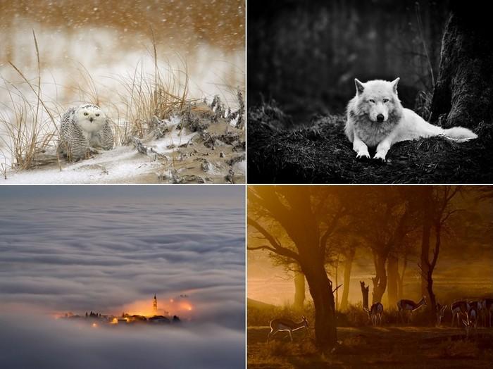 Лучшие фотографии за 30 января - 05 февраля от National Geographic