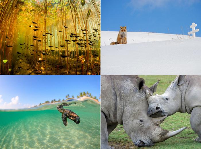 Лучшие фотографии за 31 декабря - 06 января от National Geographic