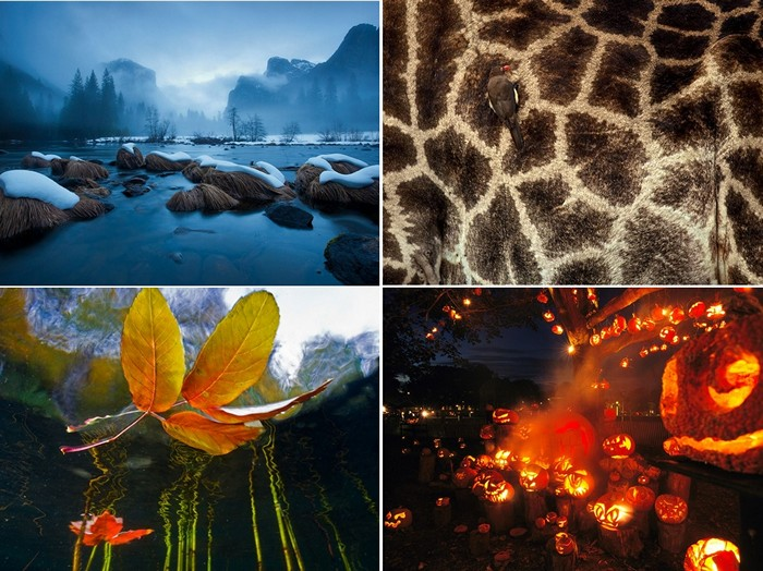 Лучшие фото за 31 октября-06 ноября от National Geographic