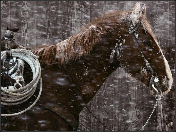 Padlock Ranch Horse, Montana