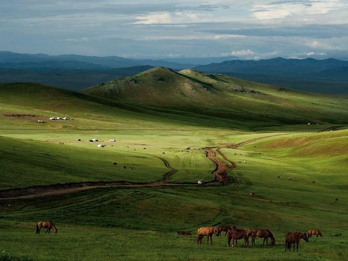 Horses, Mongolian Steppe