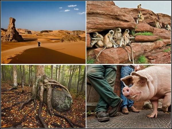 Лучшие фотографии за 22-28 августа от National Geographic