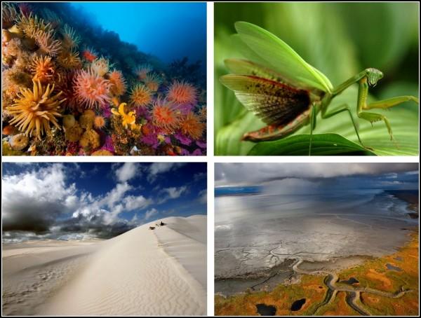 ТOP-фото от National Geographic за 29 ноября-05 декабря