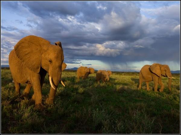 Samburu Elephants, Kenya