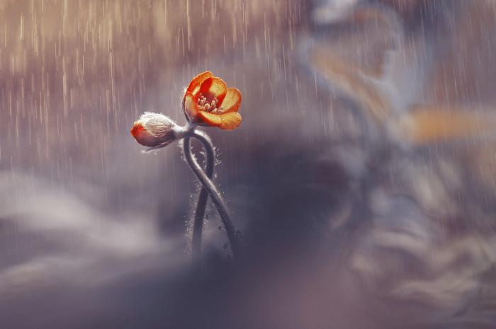 Щемящее стихотворение Маргариты Алигер о главном в отношениях
