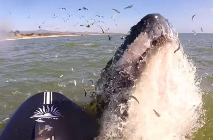 Серфингистка с флейтой приманила кита очаровательной мелодией.