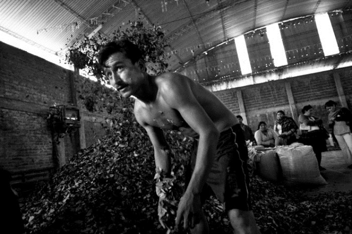Расфасовка листьев коки