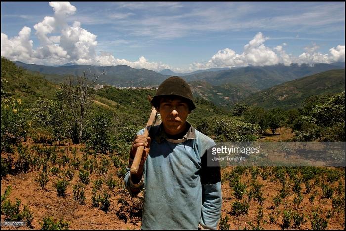 Кокалерос Justo Panuni на его плантации