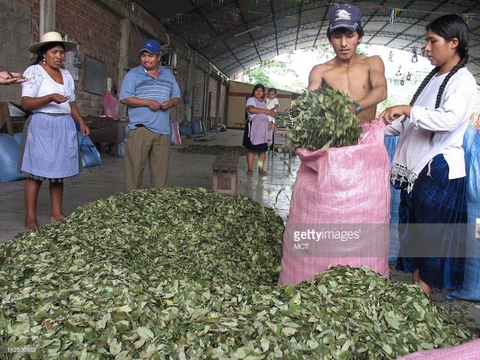 Кокалерос Hernan Ruela и его жена Maria Laura de Ruela наполняют мешок листьями коки