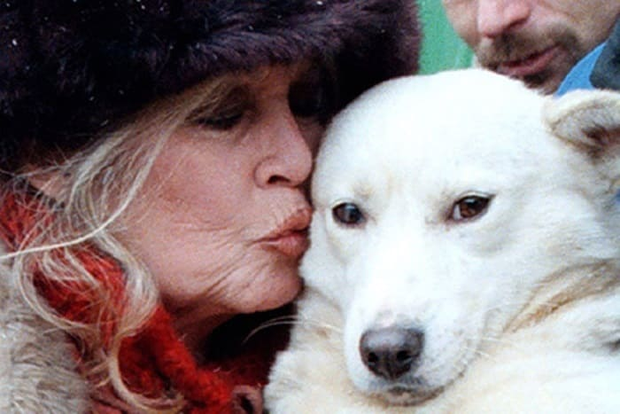 Актриса и ее самая сильная страсть – животные | Фото: lenta.ru