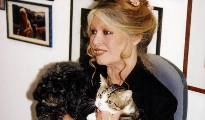 Любовь к животным стала самой большой любовью в ее жизни   Фото: 1000facts.ru