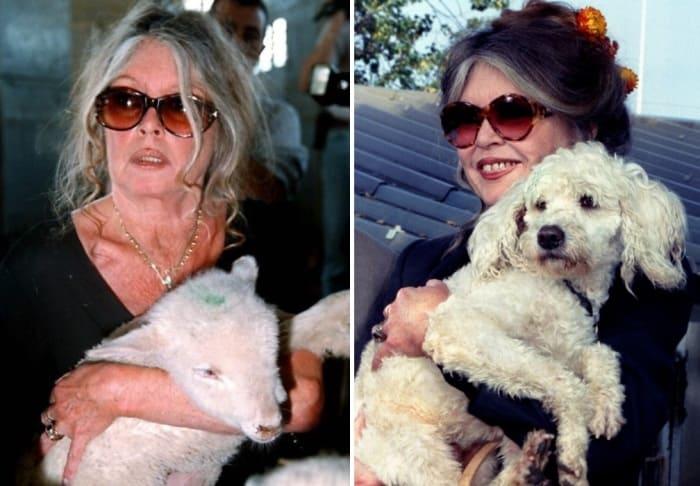 Любовь к животным стала самой большой любовью в ее жизни   Фото: portal-kultura.ru, rg.ru
