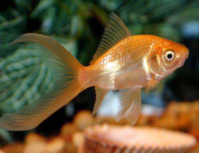 Диета *золотой рыбки*
