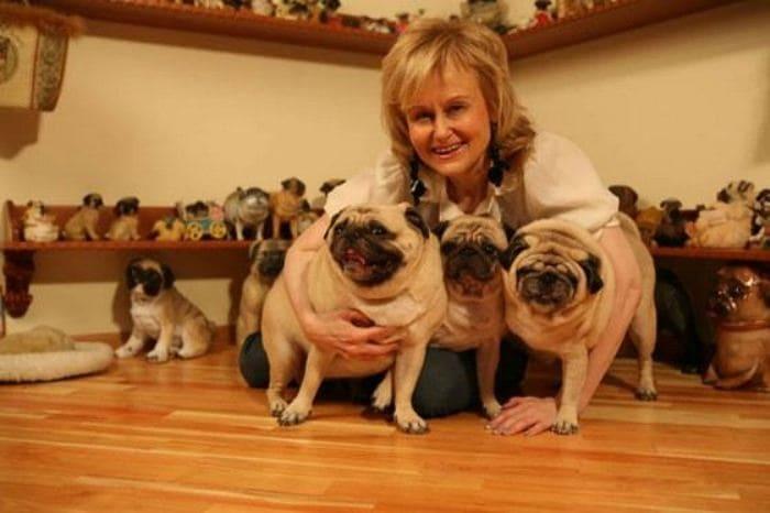 Любимые мопсы – настоящие члены семьи | Фото: uznayvse.ru