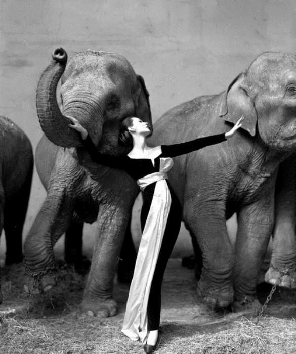 Знаменитая фотография Довимы  со слонами. Фото Ричарда Аведона
