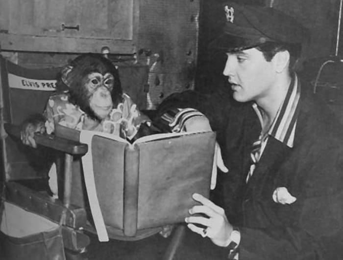 Любимый домашний питомец певца – шимпанзе Скаттер | Фото: tele.ru