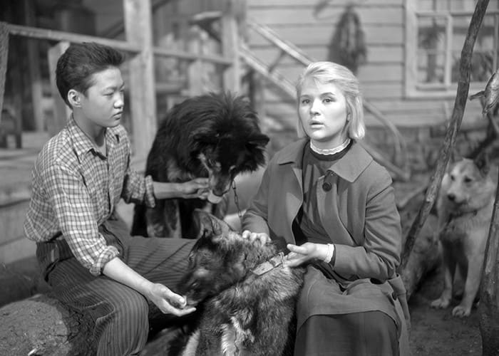 Кадр из фильма *Дикая собака Динго*, 1962 | Фото: kino-teatr.ru