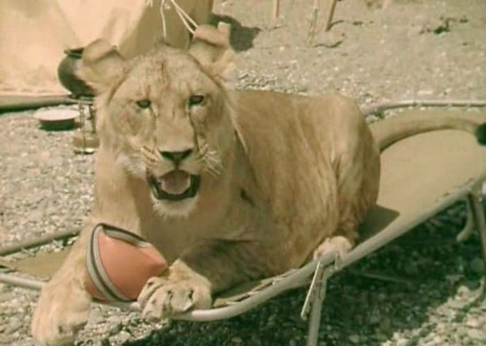 Кинг Второй в фильме *У меня есть лев*, 1975 | Фото: kino-teatr.ru