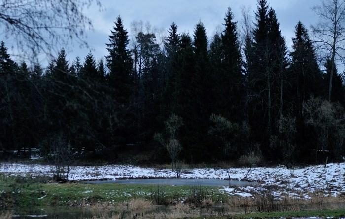 *Аленушкин пруд* в Ахтырке