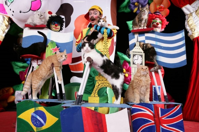 Артисты *Театра кошек* Куклачева | Фото: vilingstore.net