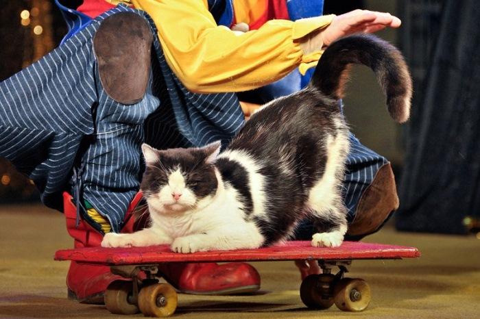 Артисты *Театра кошек* Куклачева во время выступления | Фото: udivitelno.com
