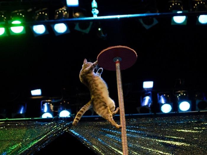 Любимые животные Куклачева во время выступления | Фото: udivitelno.com