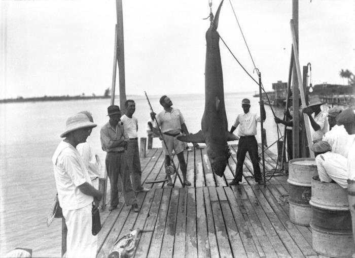 Трофей - акула! Рыбная ловля, Багамы, 1935
